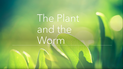 """The Plant and The Worm"""